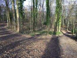Wirtschaftswald oder Erholungswald? Grüne diskutieren mit Experten über den Schwerter Wald