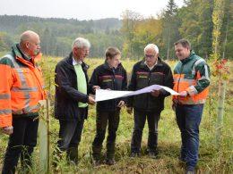 Statt Fichte wächst nun die Traubeneiche: Waldumbaumaßnahme dient der Kompensation