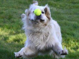 Achtung: Mit Nägeln präparierte Hundeköder liegen aus